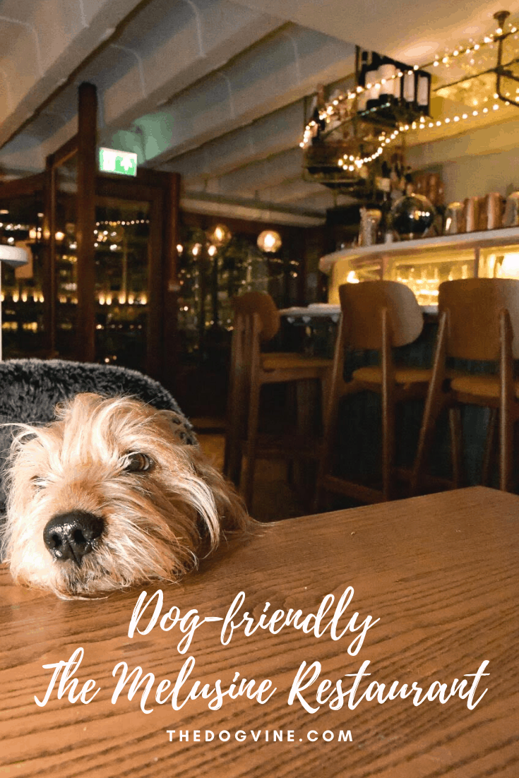 Dog-friendly The Melusine Seafood Restaurant St Katharine Docks