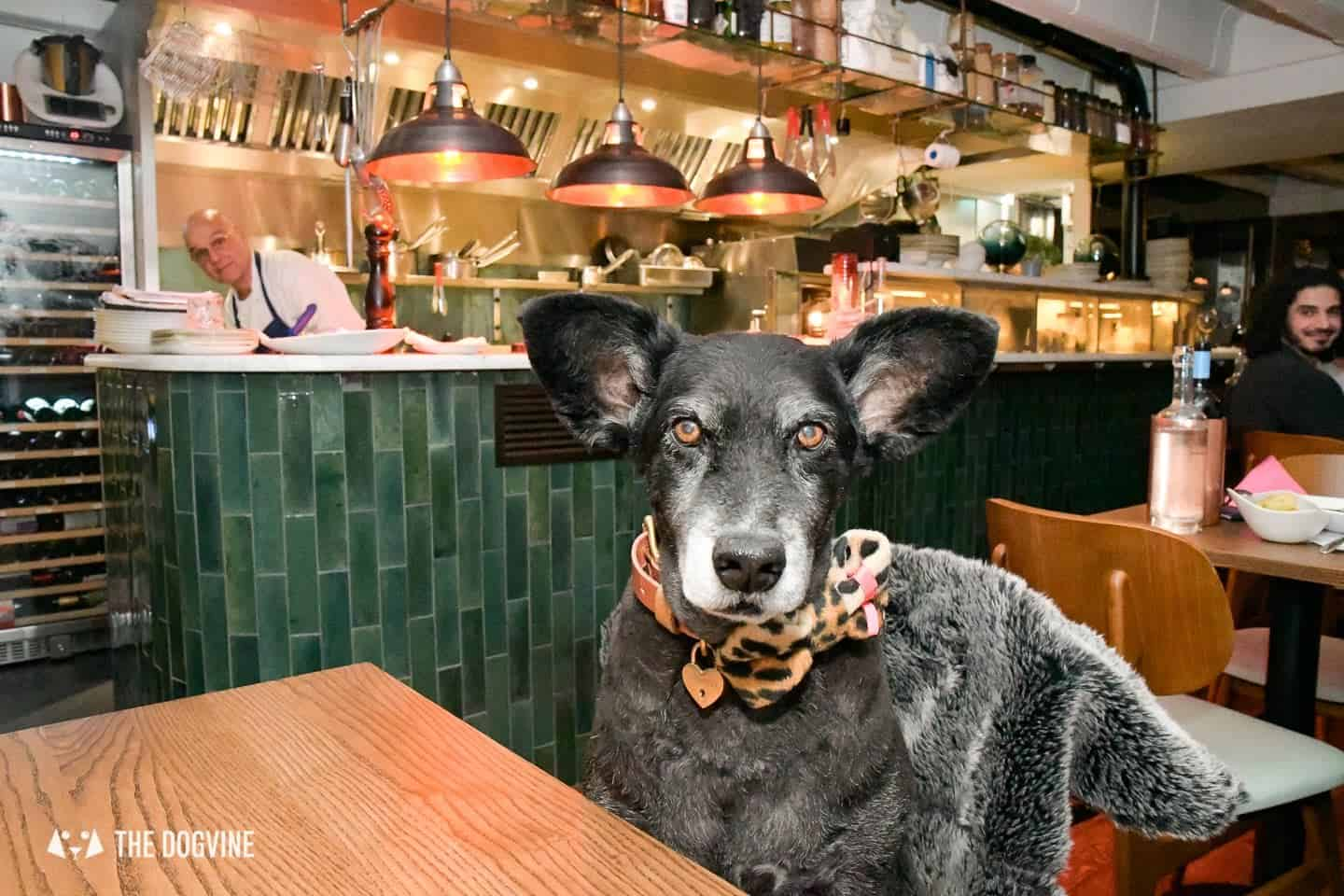 Seafood Surprises at Dog-friendly The Melusine Restaurant