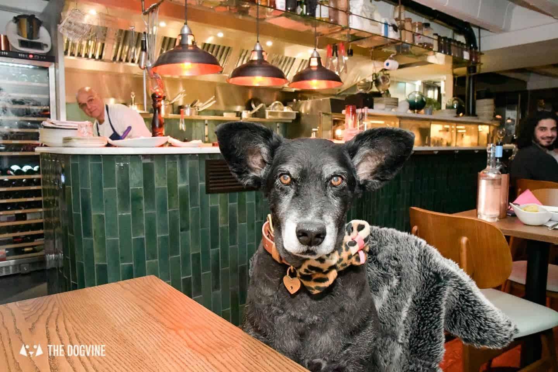 Dog-friendly The Melusine Restaurant St Katharine Docks