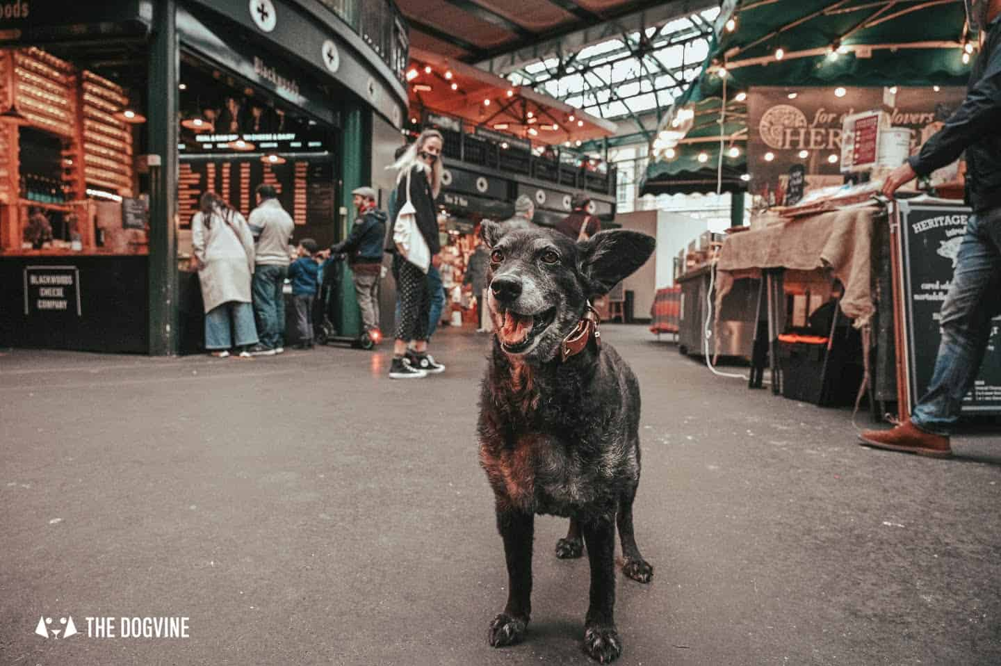 Dog-friendly-Borough-Market-A-Delicious-Thing-To-Do-With-Your-Dog