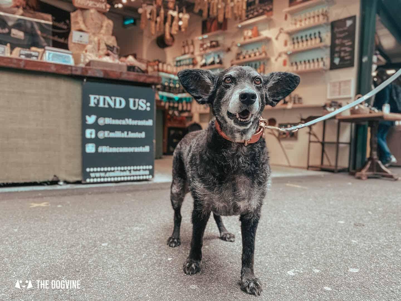 Dog-friendly Borough Market - Bianca Mora