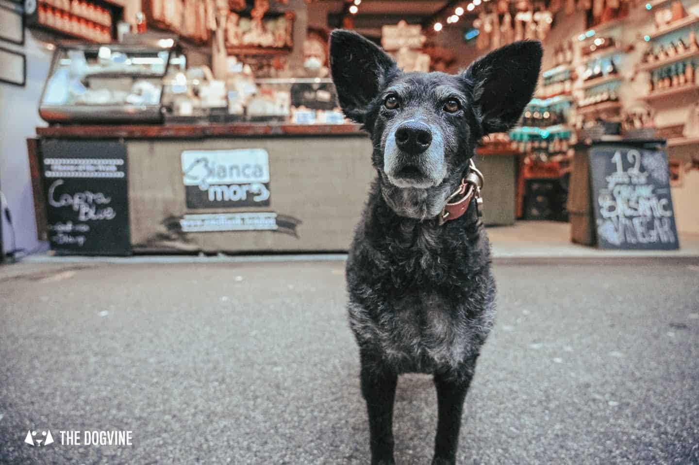 Dog-friendly-Borough-Market-Dogs-are-Welcome