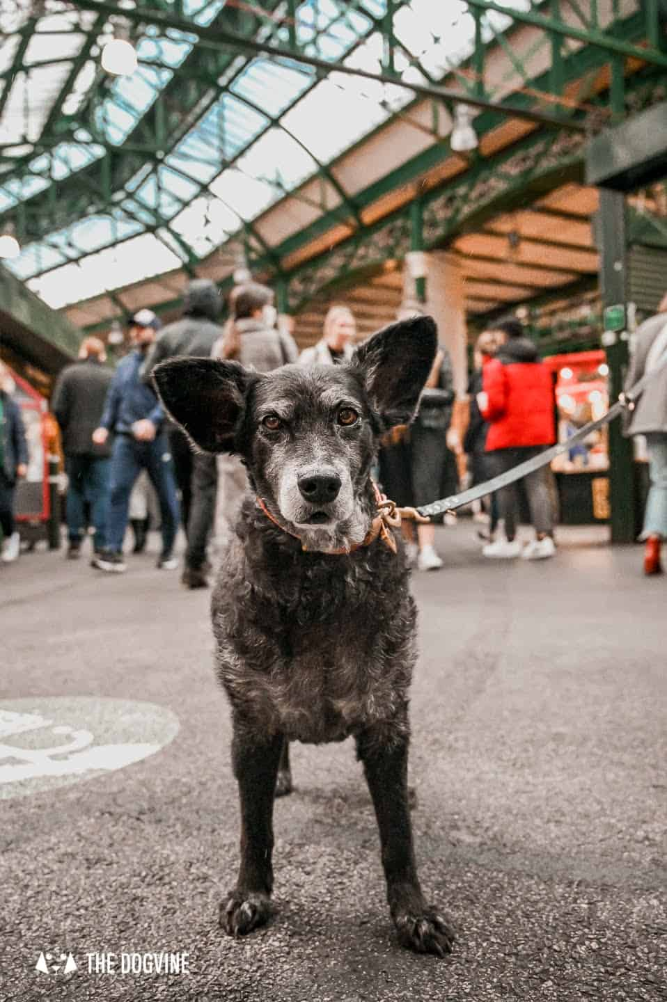 Dog-friendly Borough Market Pay it a Visit With Your Dog