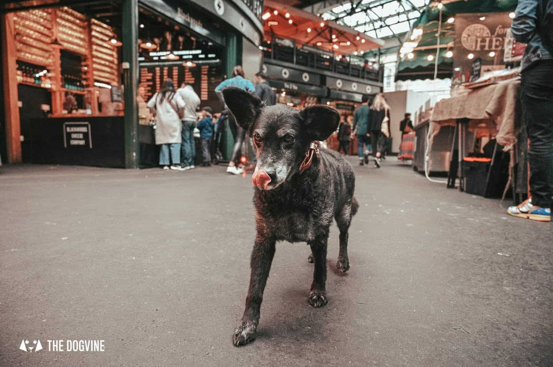 Dog-friendly Borough Market has so many smells and tastes to enjoy