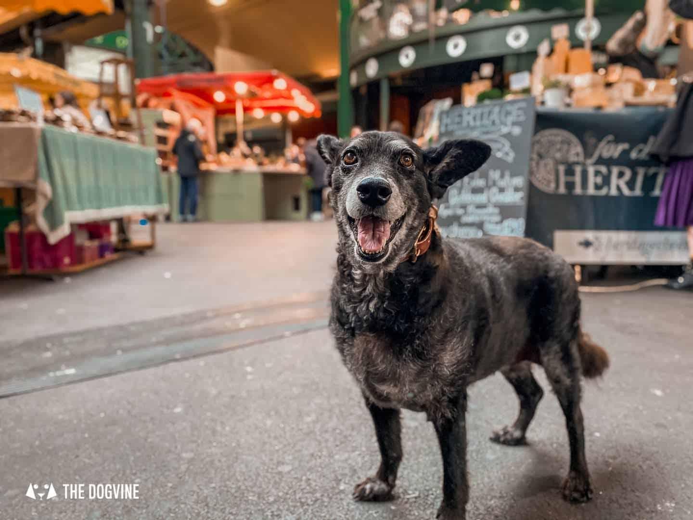 Dog-friendly-Borough-Market-is-full-of-tasty-treats