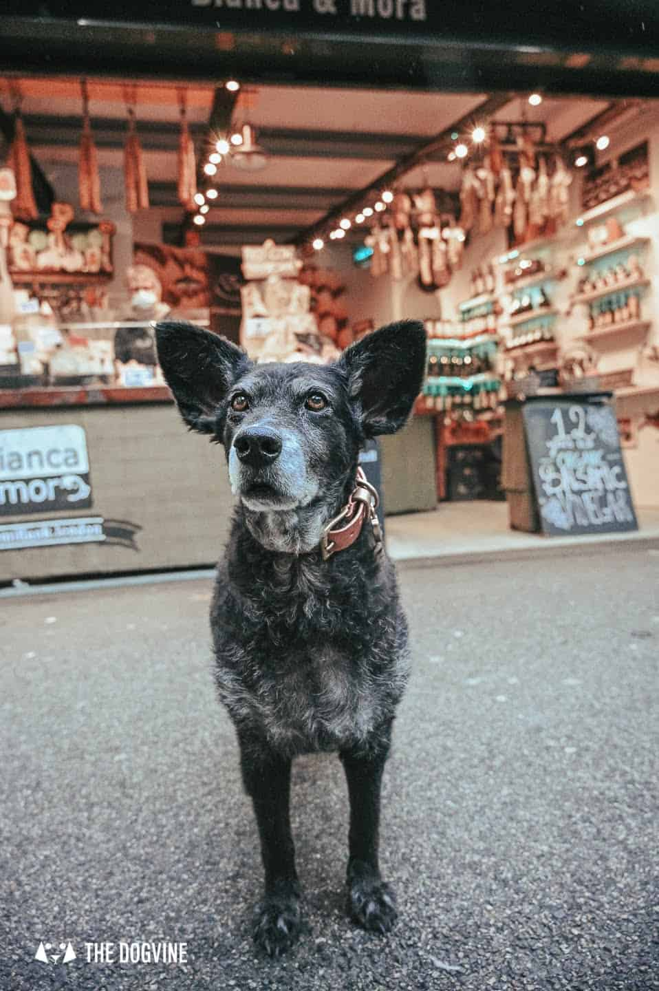 Dog-friendly Borough Market is open every day except for Sundays