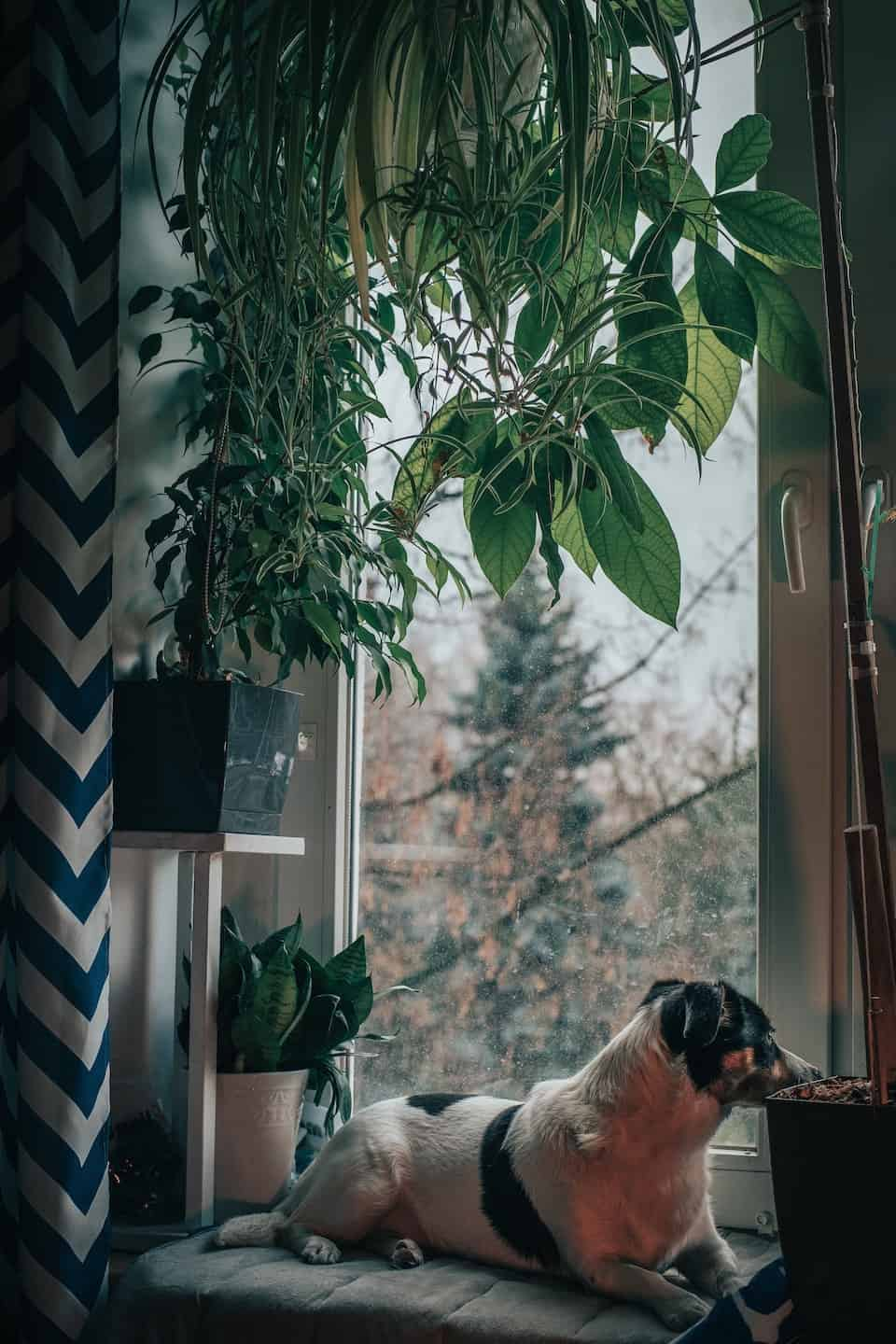 Dog relaxing at home - Photo by Samur Isma