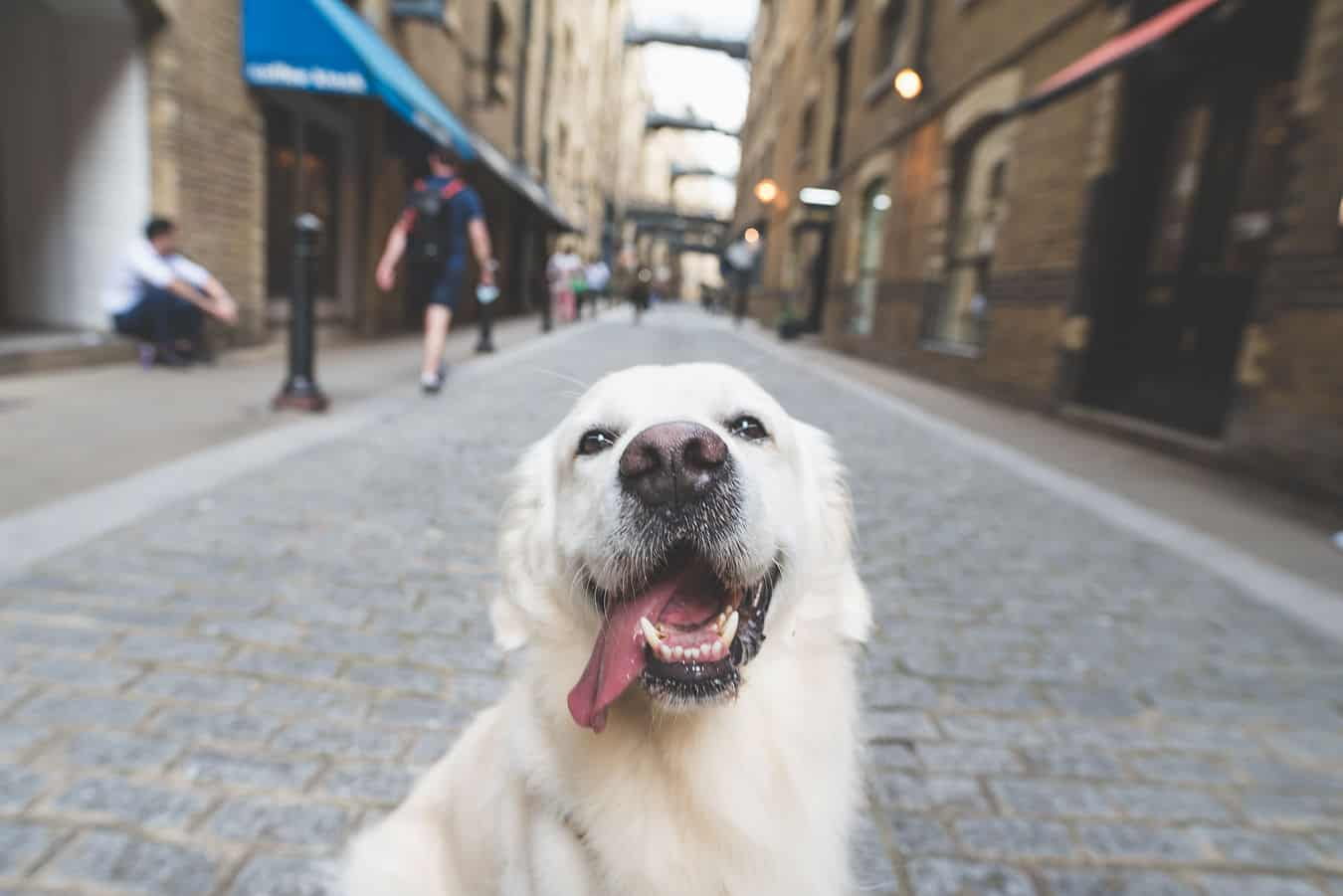 Finding a Pet-friendly Property in London - Photo by Aurelie Four
