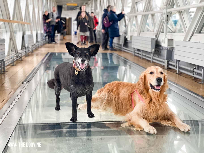 VIPooch Day at Tower Bridge - Dog-friendly London