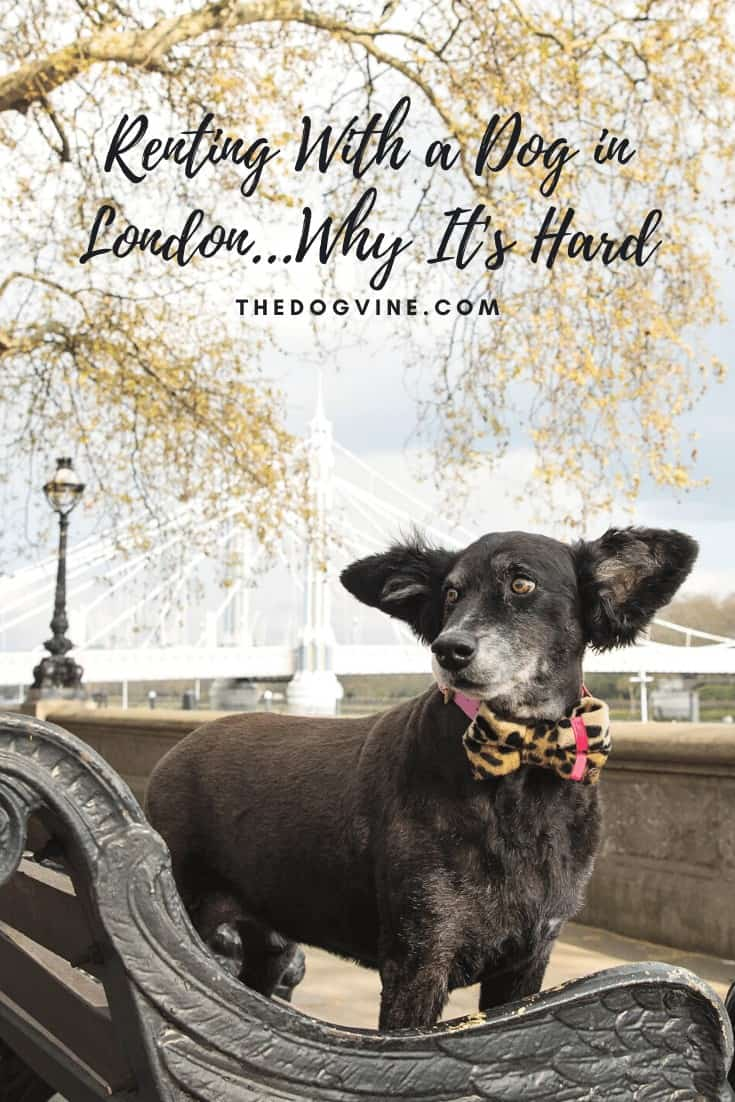 Renting with a dog in London...why it's hard