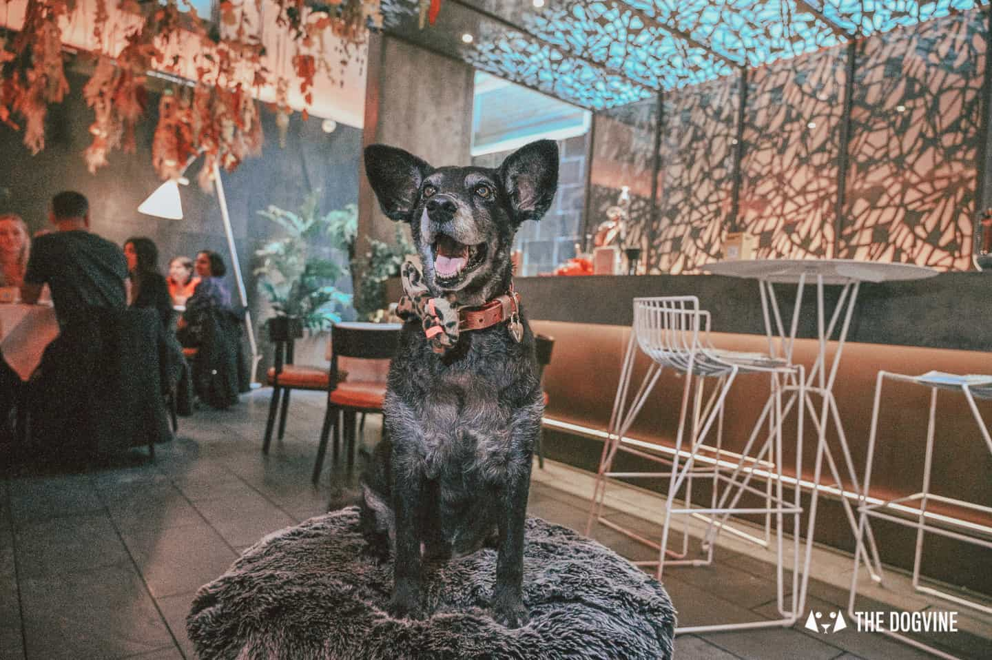 Sunday Roasts With Your Dog At Dog-friendly South Place Hotel London