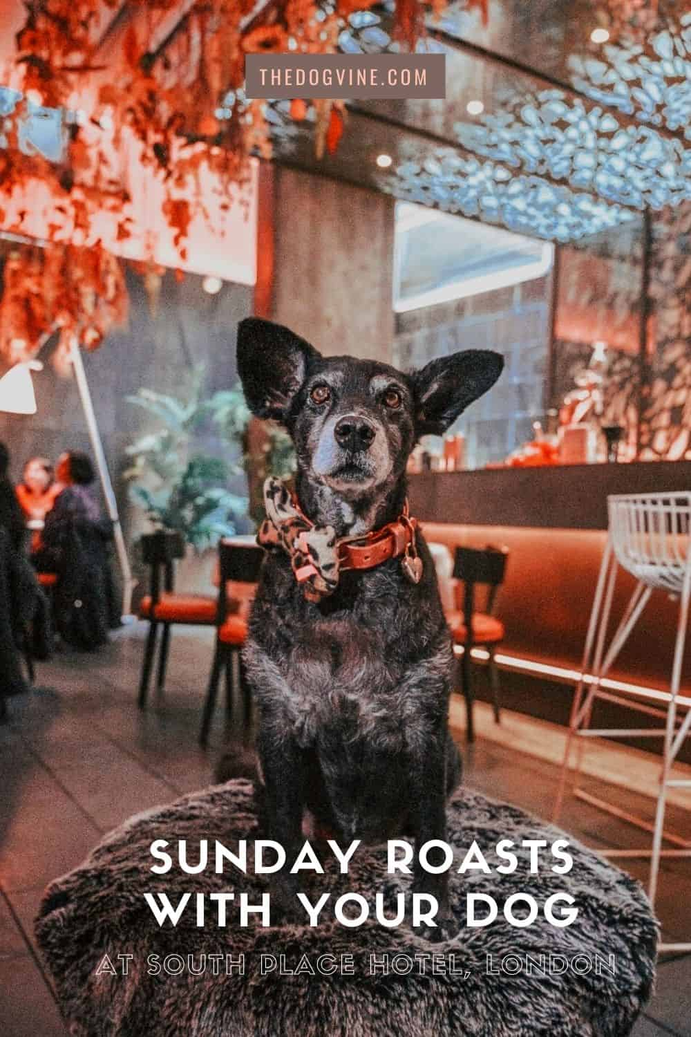 Sunday Roasts and Sunday Doggy Snacks at South Place Hotel London