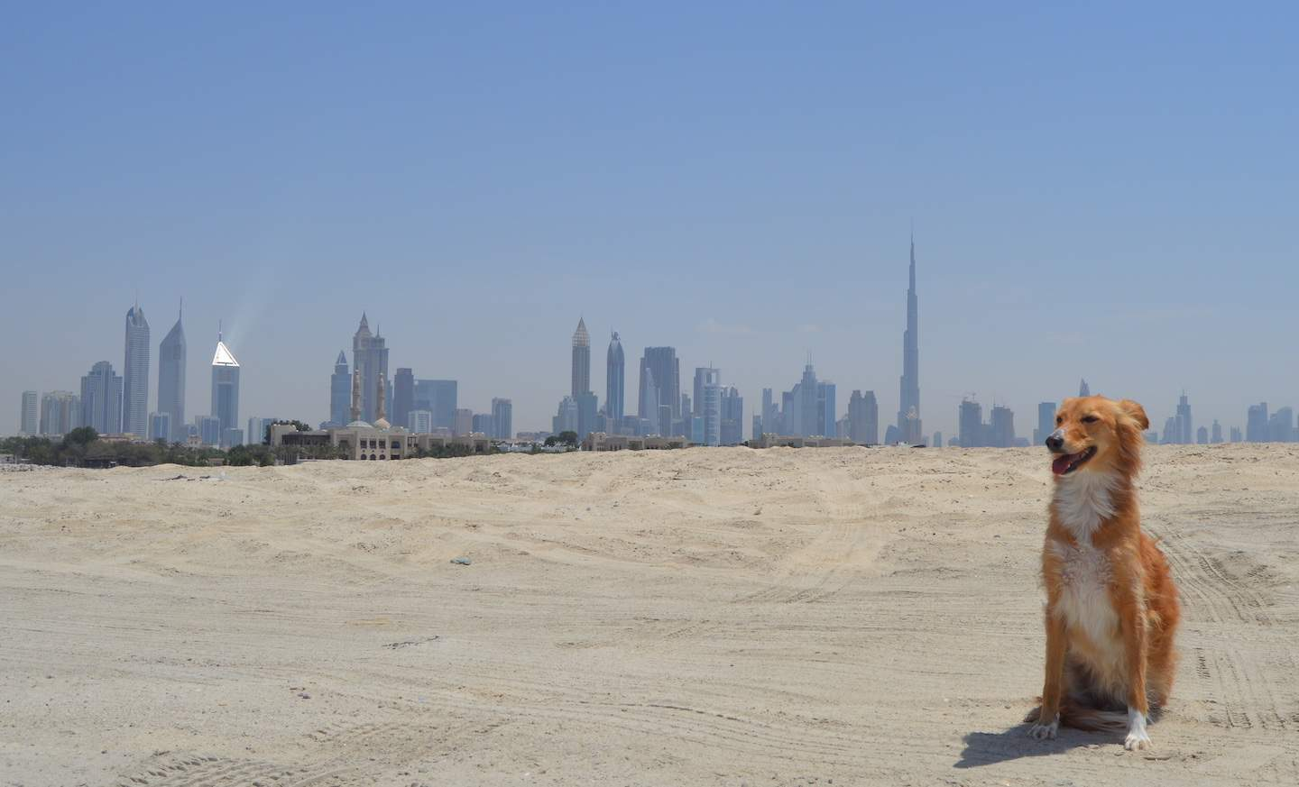 Beautie, The 3-legged Rescue Dog Raising Funds For Dog Shelters with the Dubai Skyline