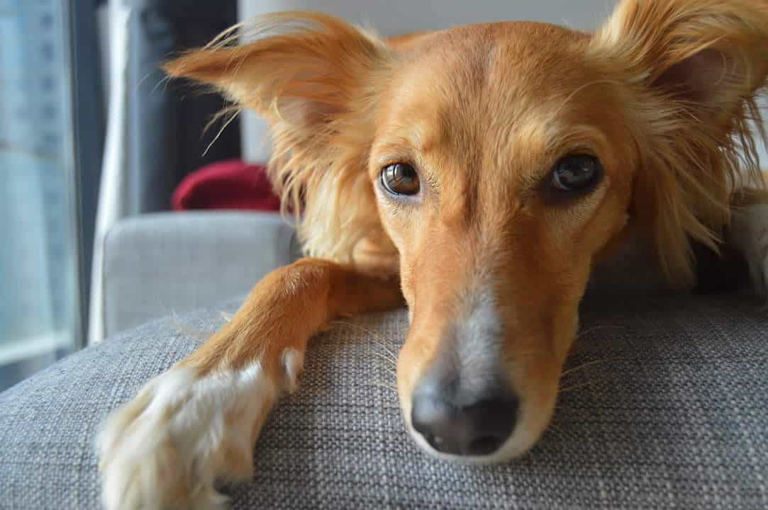 Beautie, The 3-legged Rescue Dog from Dubai
