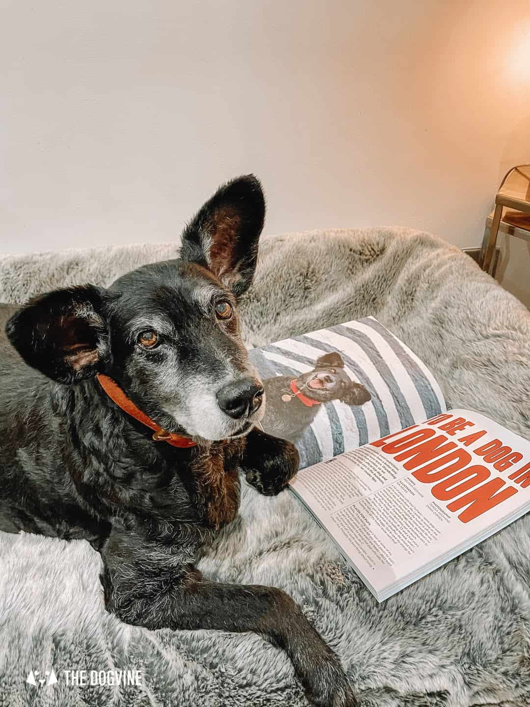 Belinha's To Be A Dog In London Article - Wunderdog Magazine
