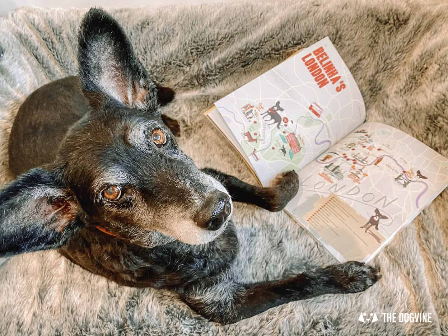 Belinha's To Be A Dog In London - Wunderdog Magazine