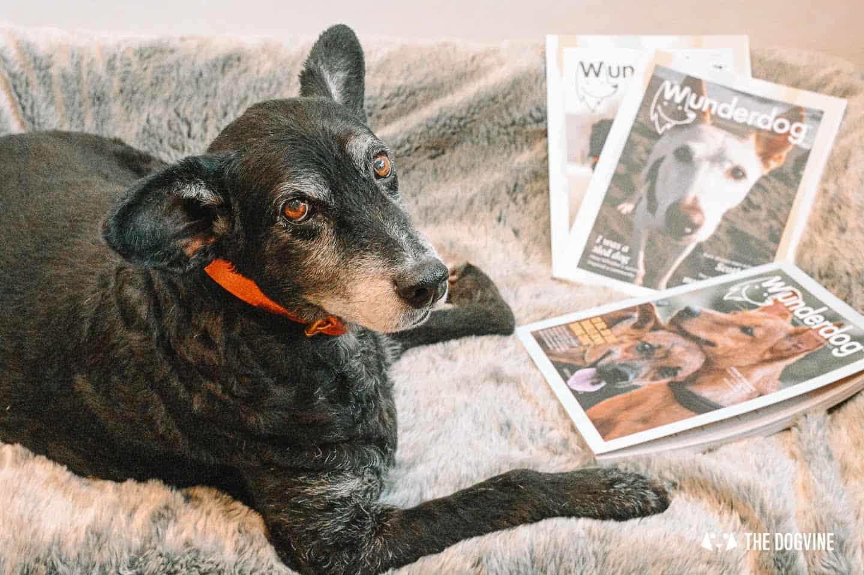 Wunderdog Magazine - the Magazine For Rescue Dogs
