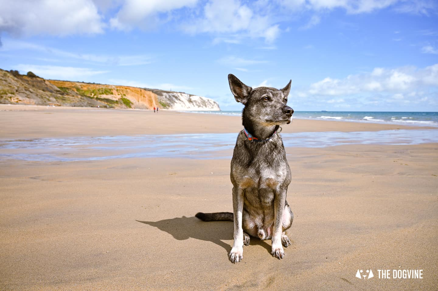 Dog-Friendly Holidays in the UK – The Top Trends For 2021