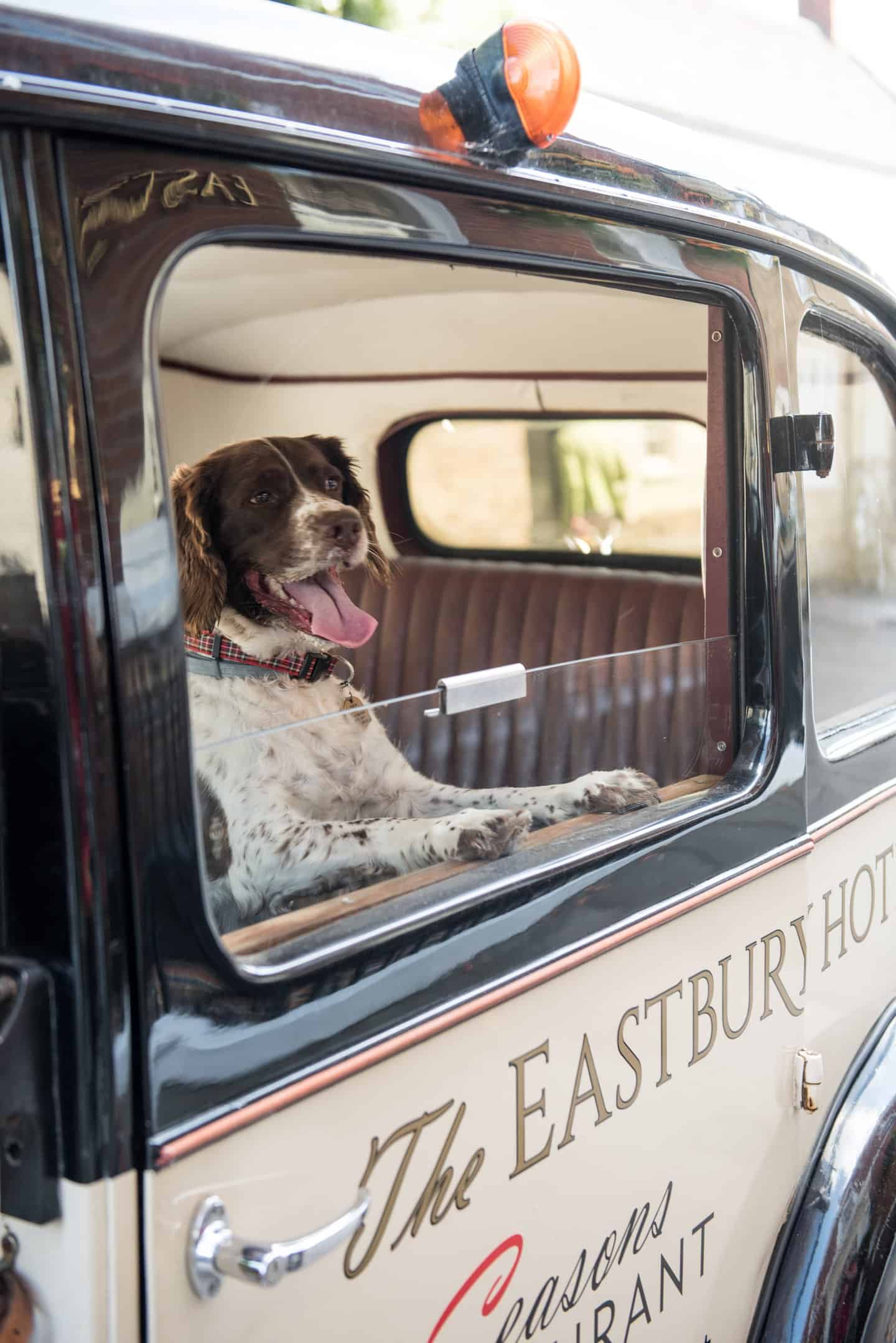 Four-legged guests arrive in style at The Eastbury Hotel