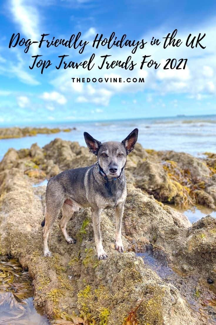 Dog-Friendly Holidays in the UK  Travel Trends For 2021
