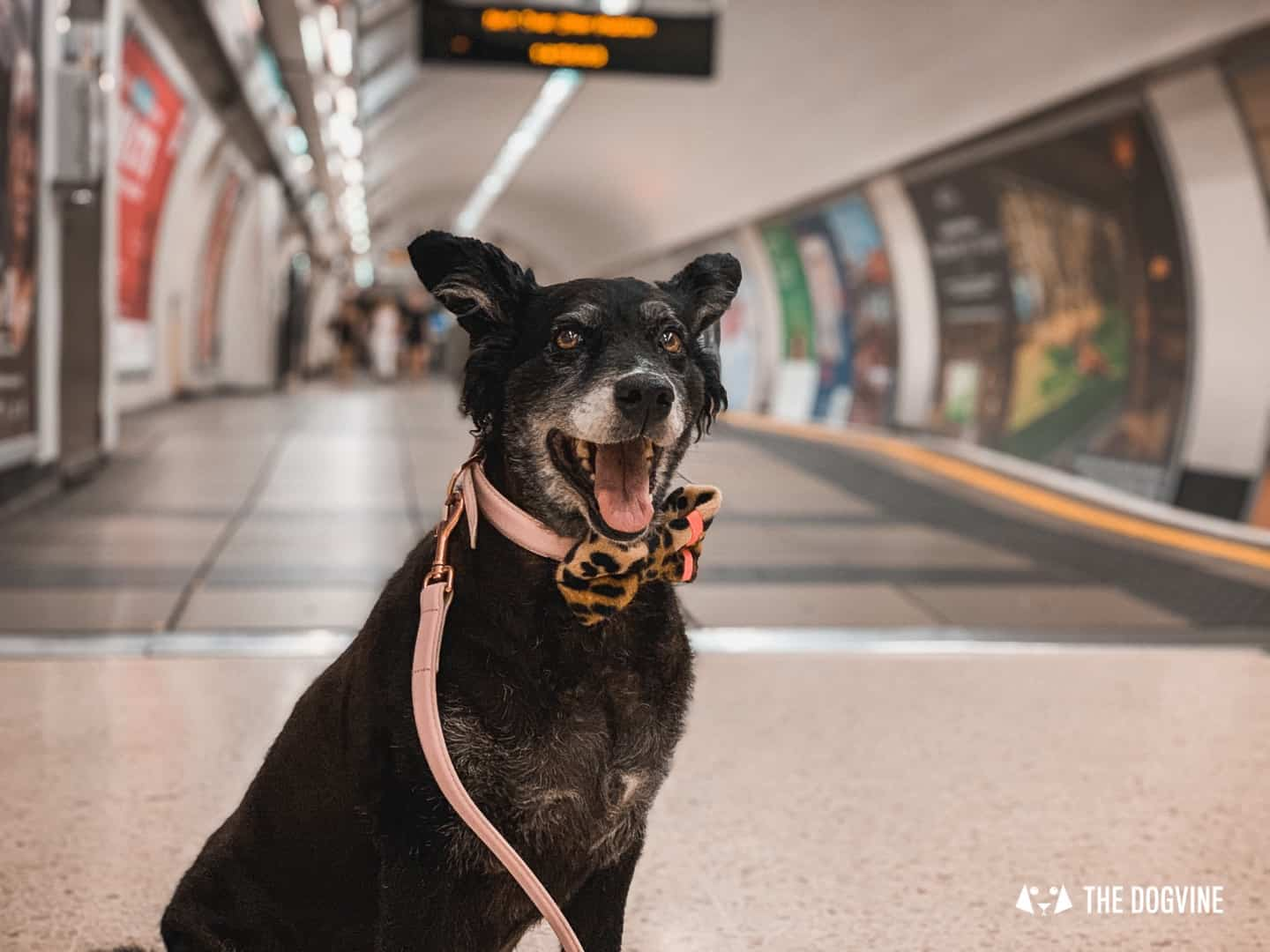 Dog-friendly London Public Transport - Dogs On The Tube
