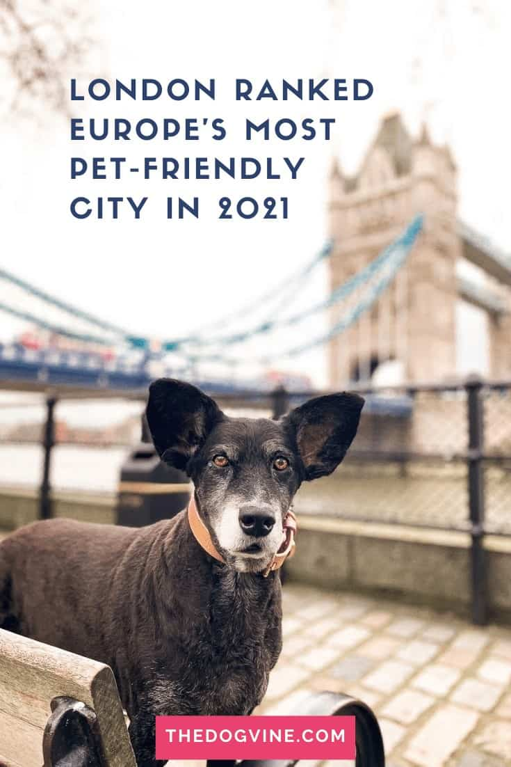 Dog-friendly London is ranked Europe's most pet-friendly city for 2021