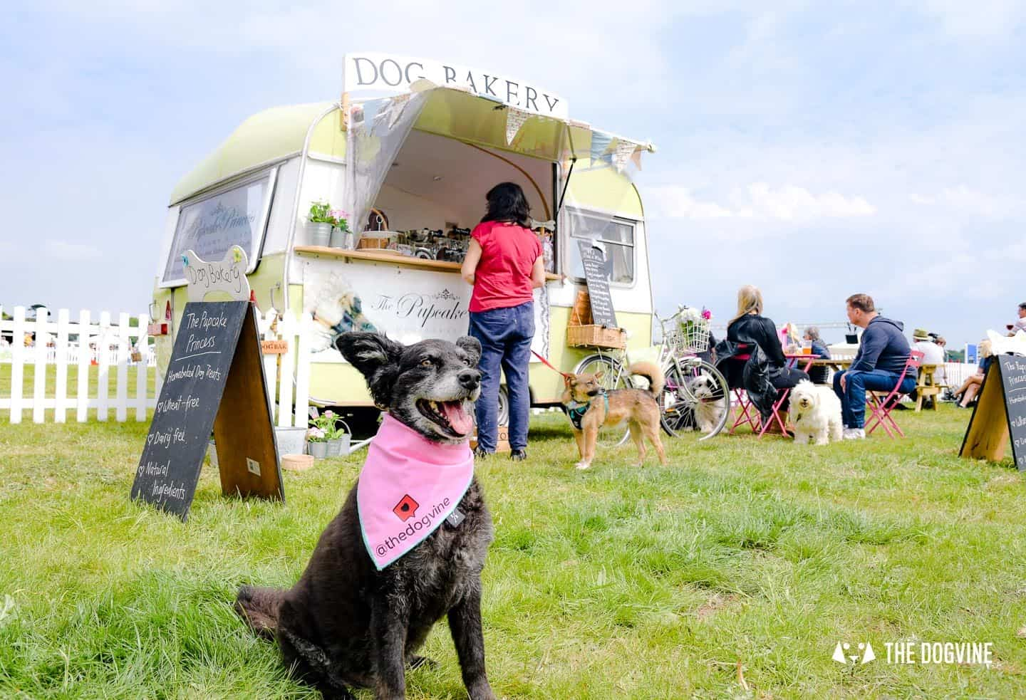 Dogstival 2021 Burley Park New Forest
