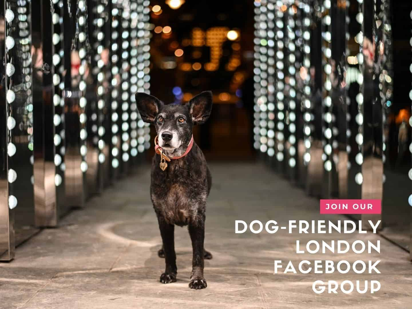 Join our Dog-friendly London Facebook Group