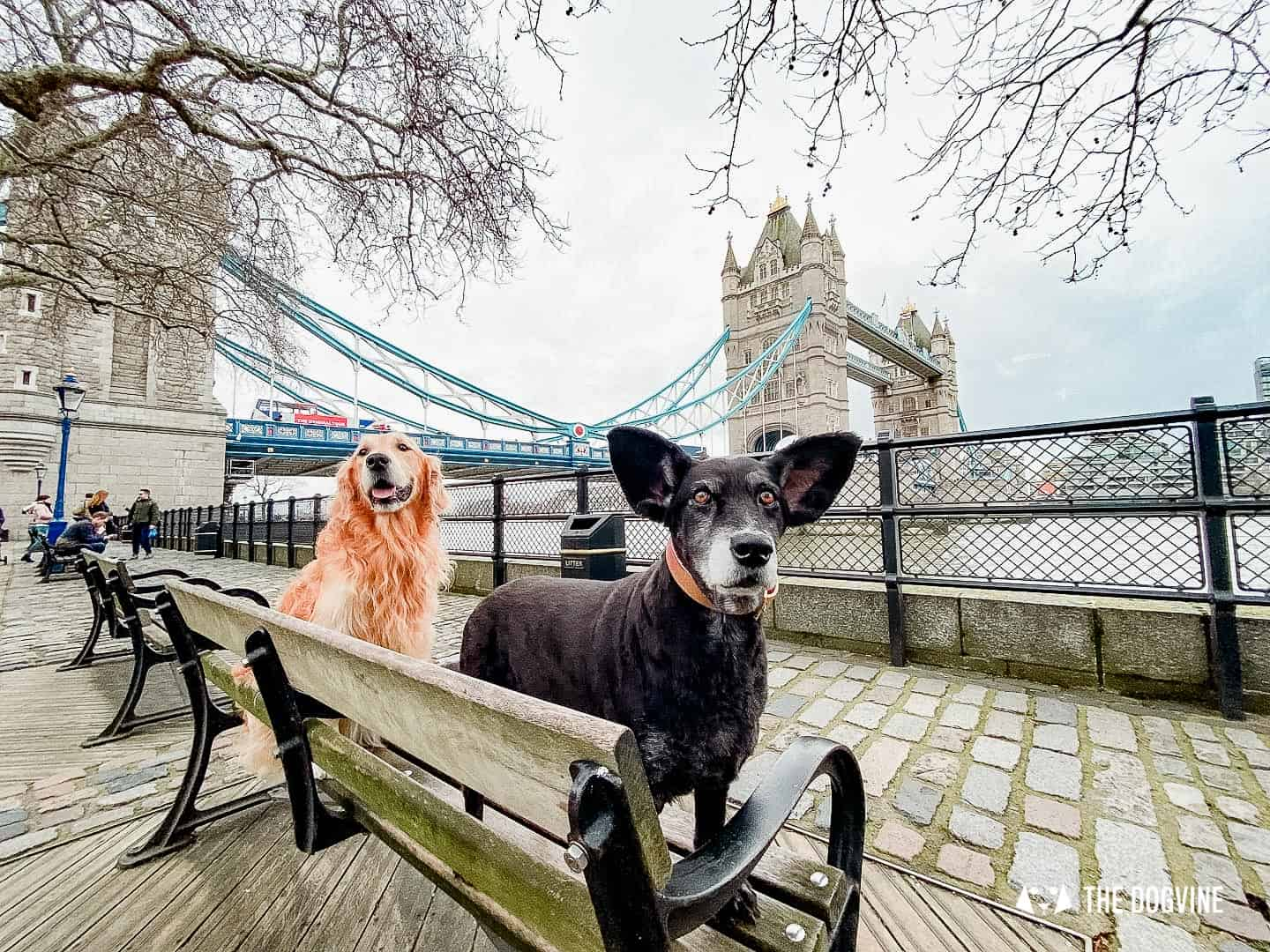 Dog-friendly London | Why London is Europe's Top City for Pets
