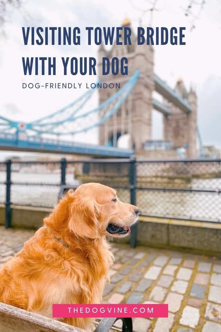 Visiting Tower Bridge With Your Dog