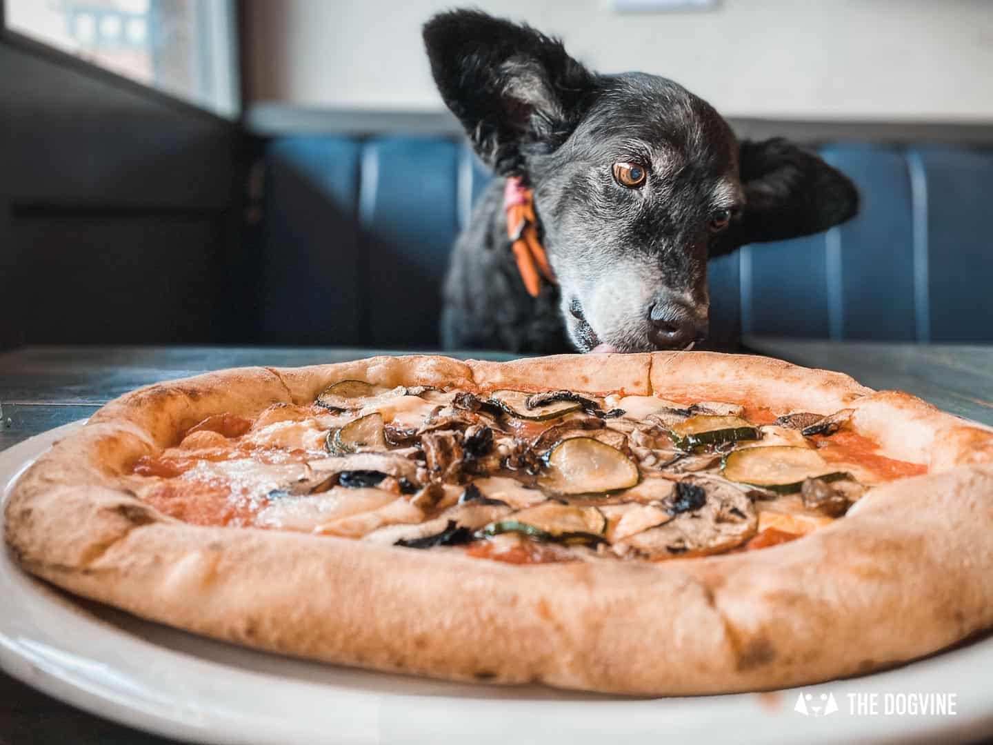 19 Great Dog-friendly Pizza Restaurants in London To Try