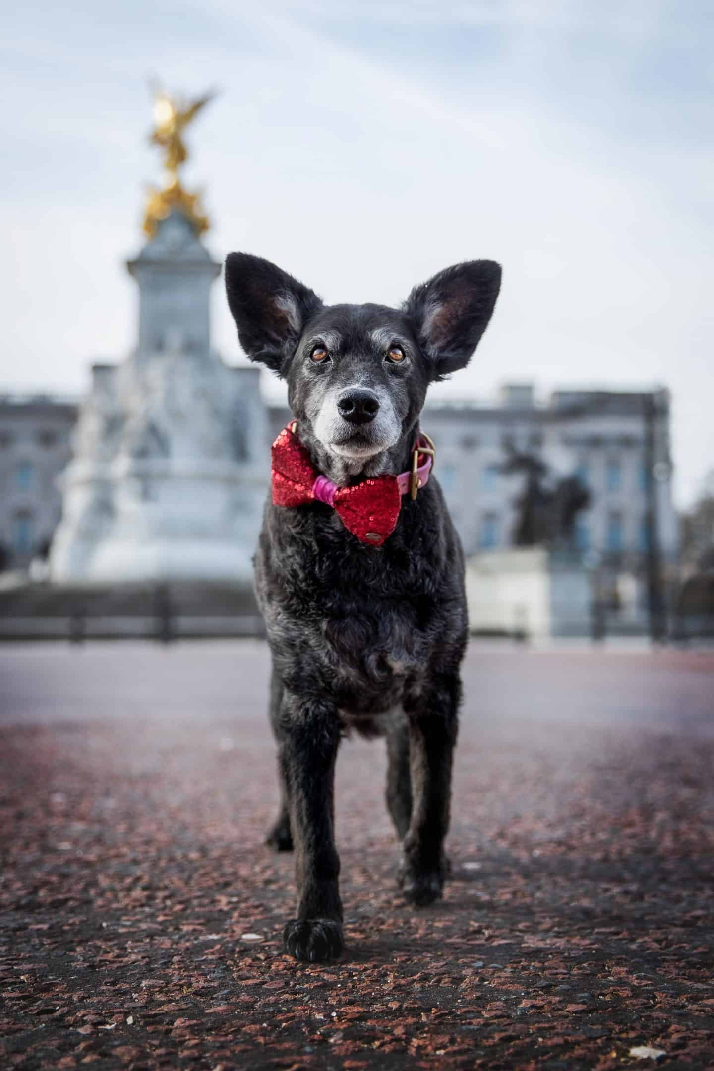 Belinha Strutting Down The Mall by Raven Imagery