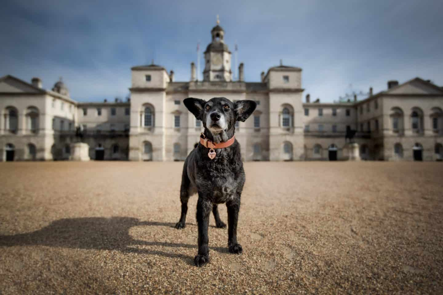 London Dog Photography You will Love: Raven Imagery Review