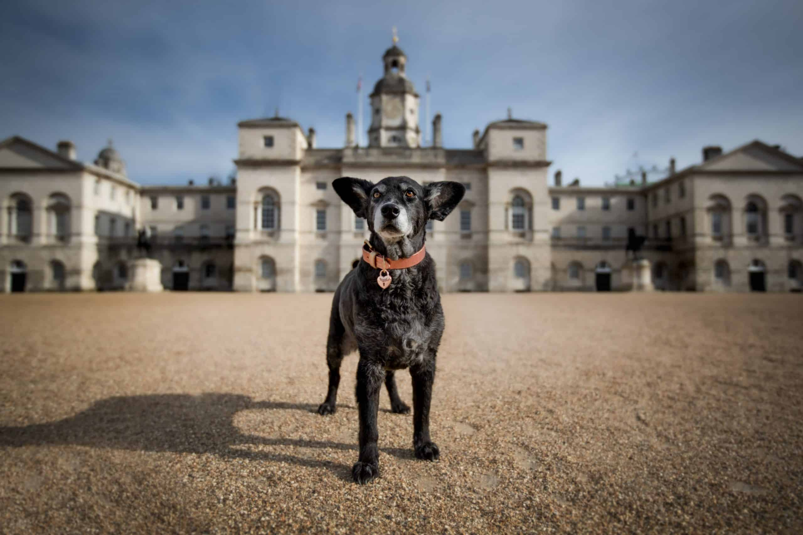 Belinha at Horse Guards Parade - London Dog Photography - Raven Imagery