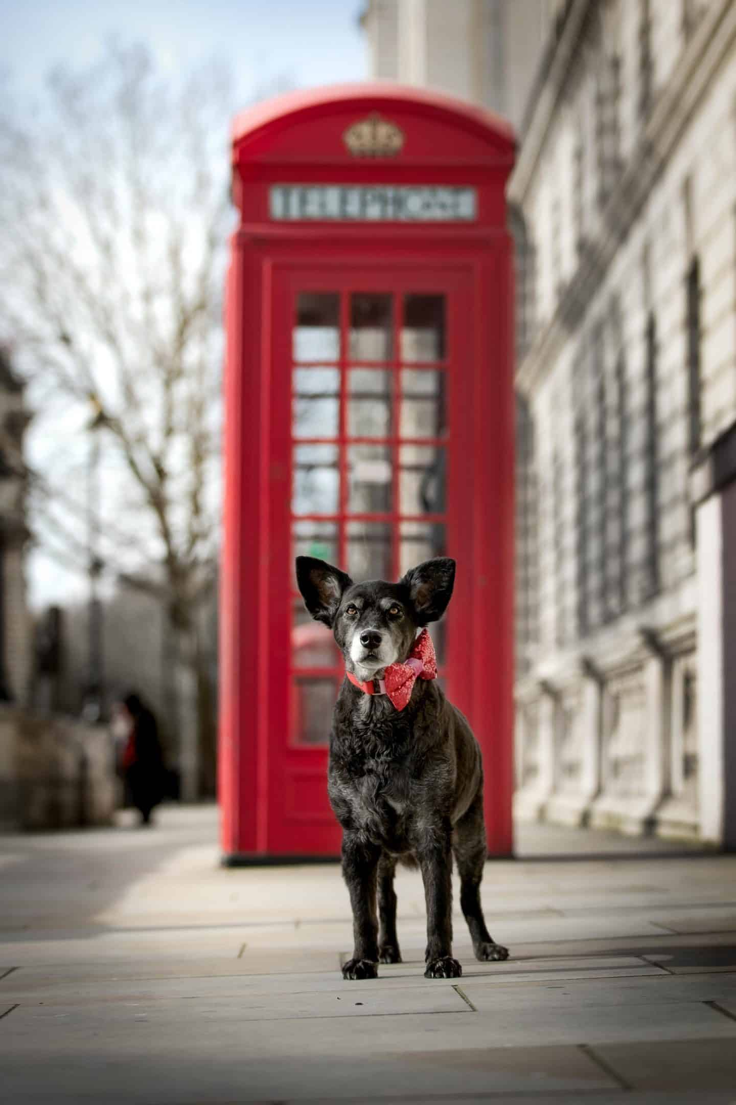 Belinha at Westminster - London Dog Photography by Raven Imagery