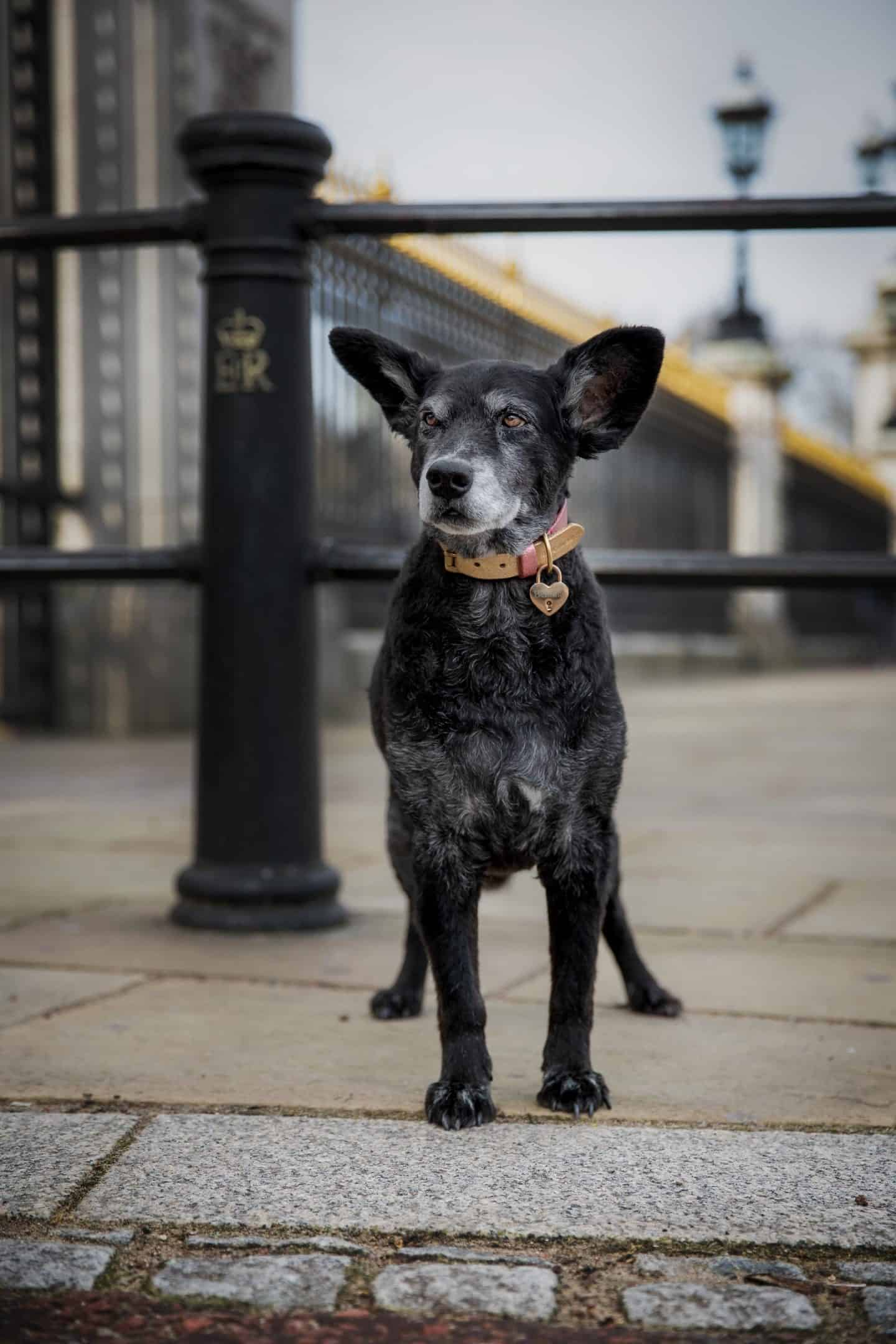 Belinha in front of Buckingham Palace - by Raven Imagery