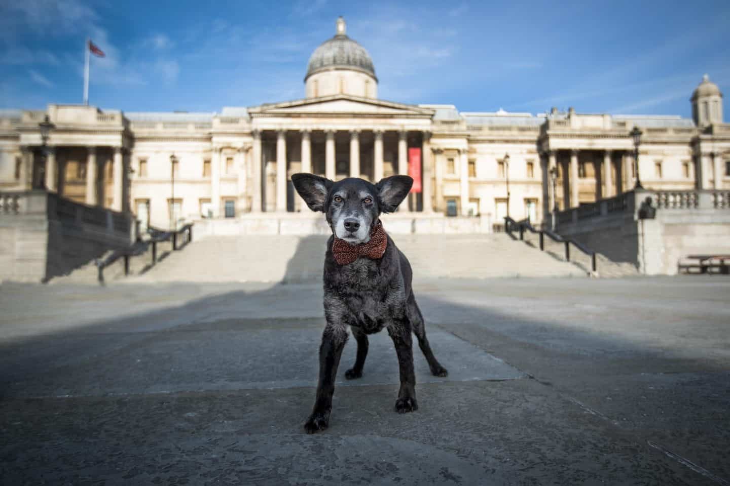 London Dog Photography in Trafalgar Square - by Raven Imagery