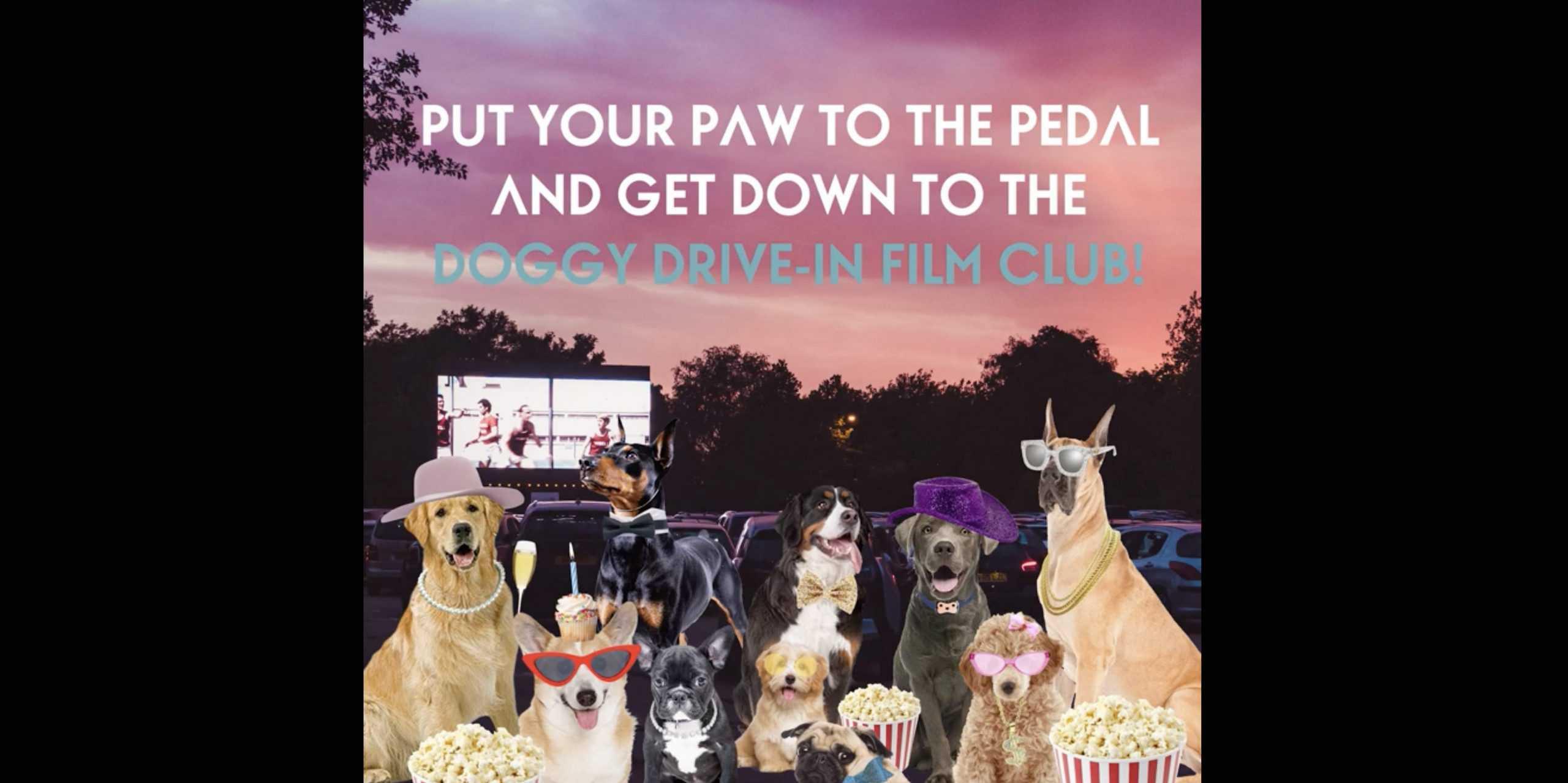 Doggy Drive In Film Club Sandown Park Racecourse - Rooftop Film Club