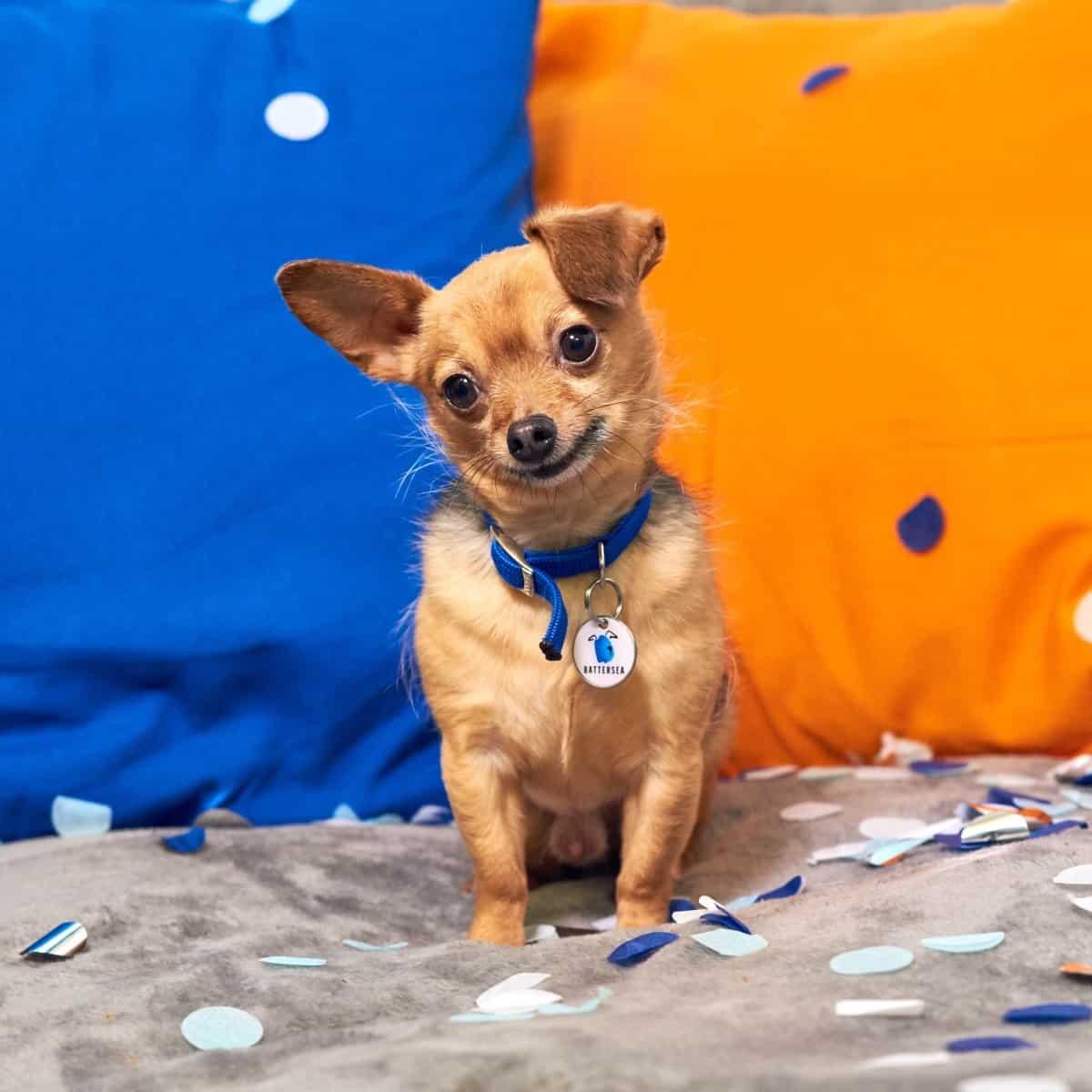 Adopt A Dog - Battersea