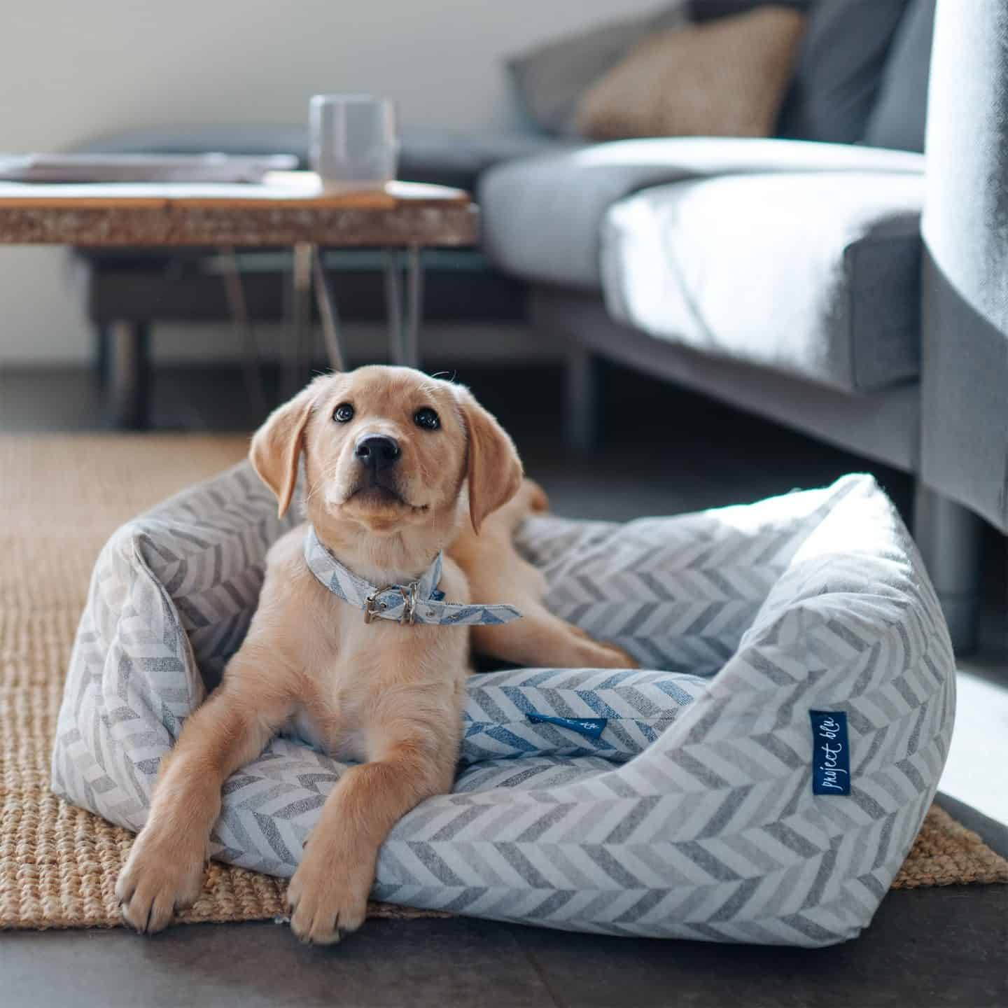 Project Blu Recycled Dog Beds
