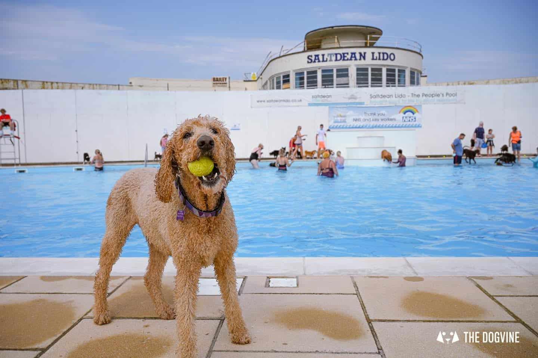 Saltdean Lido Dog Swim 2021 4