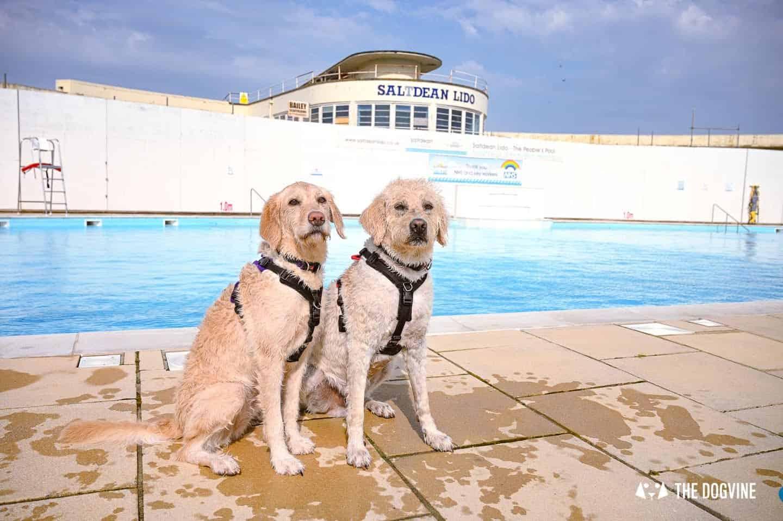 Dog Swim regulars at Saltdean Lido