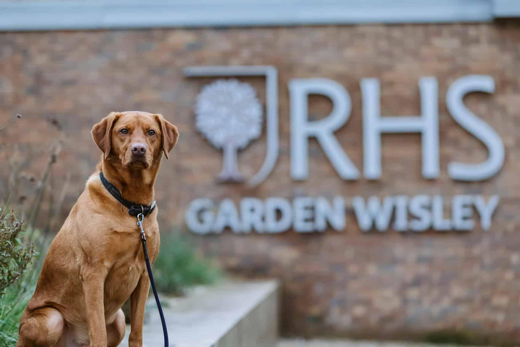 Walkies at Wisley Gardens - Photo RHS Garden Wisley