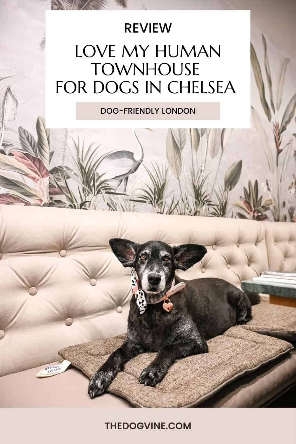 Love My Human Townhouse Chelsea Review