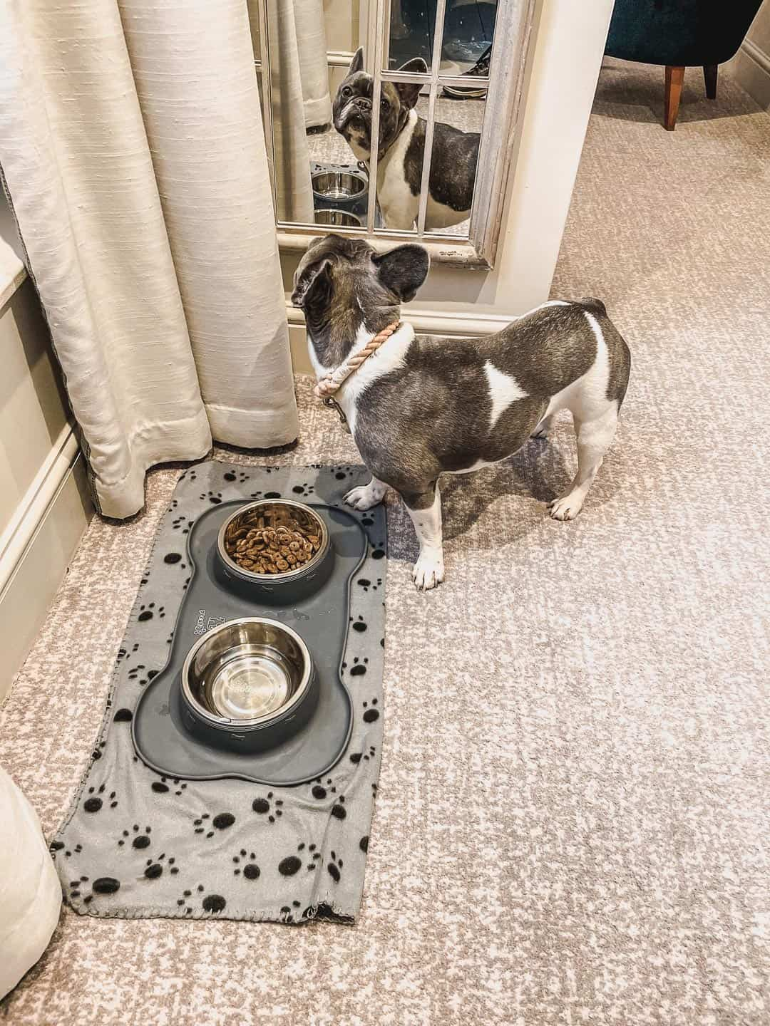 A warm welcome for dogs at the Richmond Hill Hotel