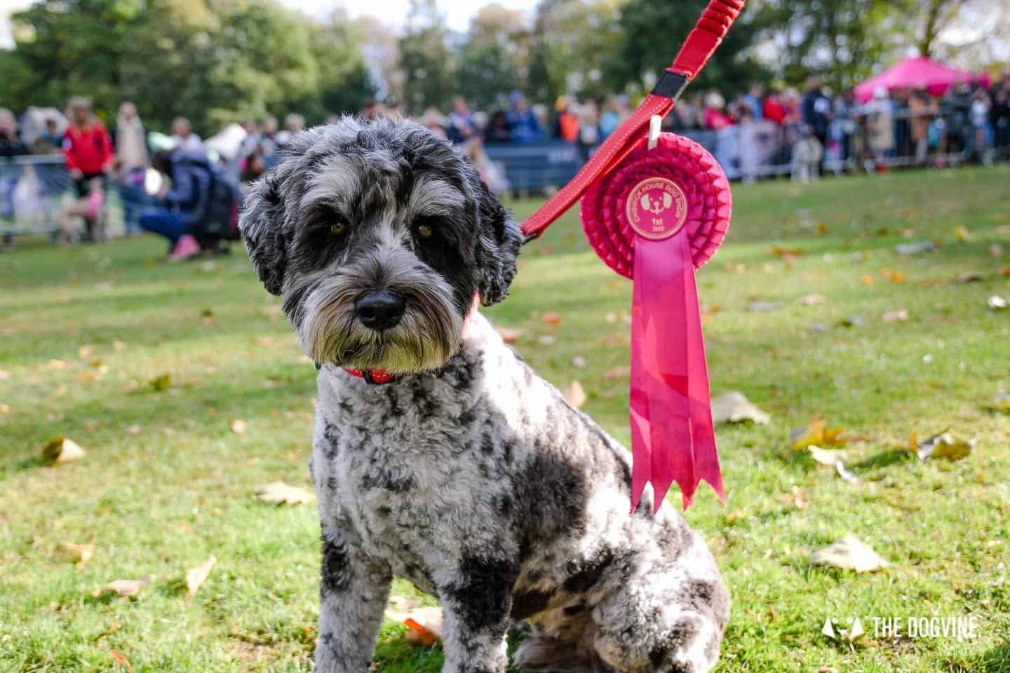 Chiswick House Dog Show 2021