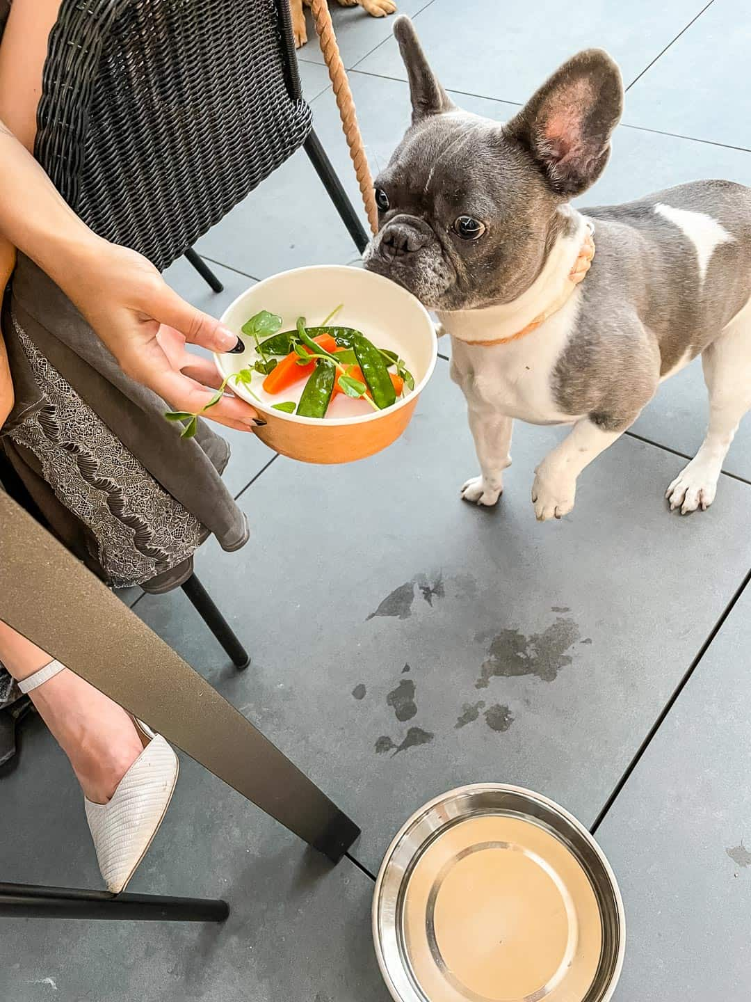 Dinner for dogs at 144 On The Hill