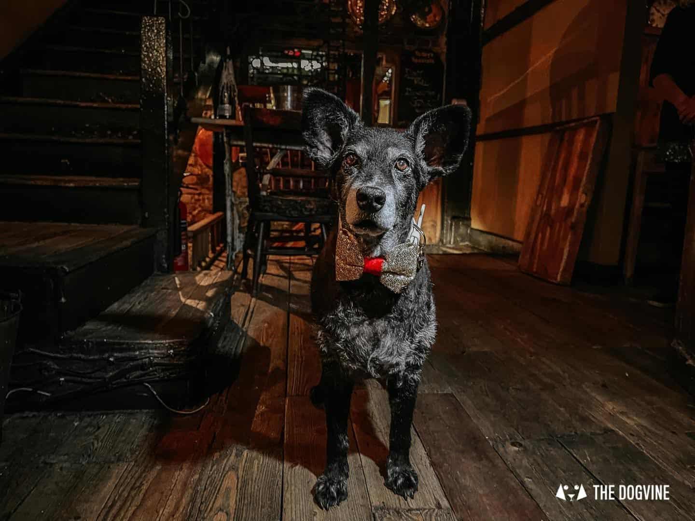 Dogs are always welcome at Maggie Jones's in Kensington