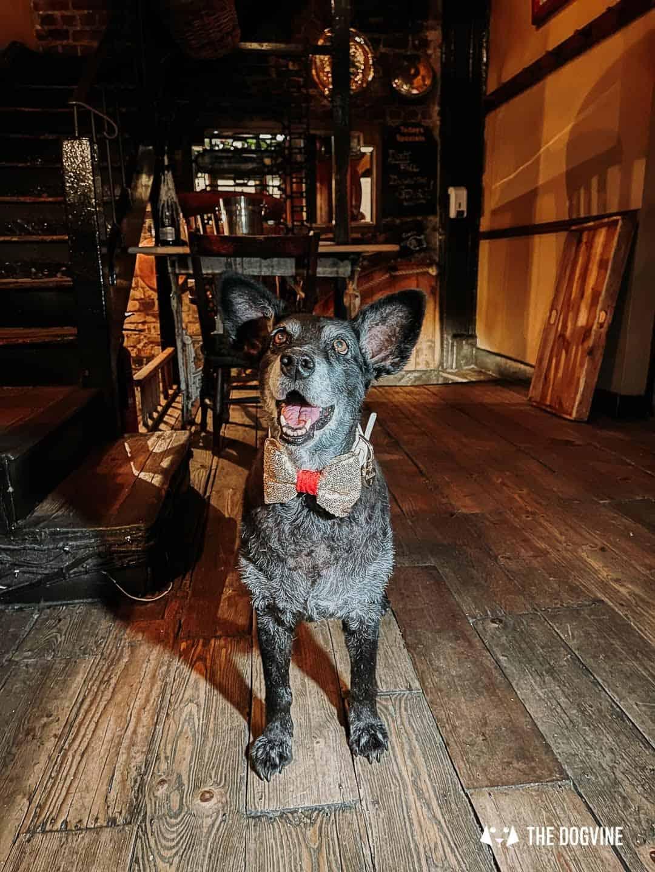 Dog-friendly Maggie Jones's Restaurant Kensington London