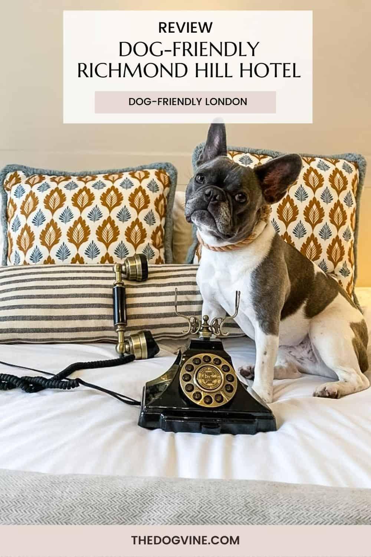 Dog-friendly Richmond Hill Hotel Review Richmond Upon Thames